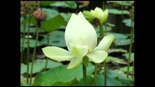 getlinkyoutube.com-Fen Kep _ตั๊กแตน ชลดา