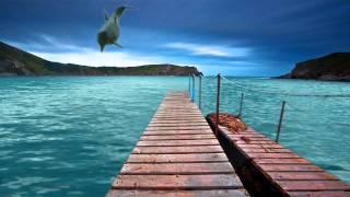 getlinkyoutube.com-Dolphin - video designed by dreamscene.org