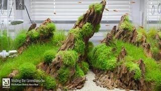 Green Aqua - Aquascaping gallery