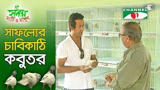 getlinkyoutube.com-Pigeon farming in Bangladesh