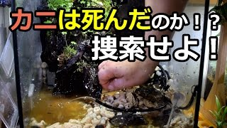 getlinkyoutube.com-【カニは死んだ?】カニ救出作戦!からのリセット!?part1