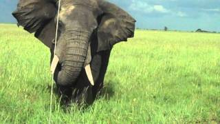 getlinkyoutube.com-charging elephant