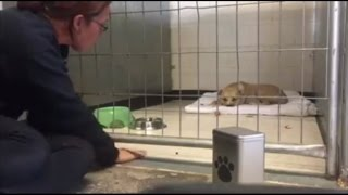 getlinkyoutube.com-Depressed Pitbull Refuses to Move for Days Until 7-Year-Old Boy Arrives
