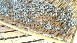 Επιθεώρηση μελισσιού 14-3-2017