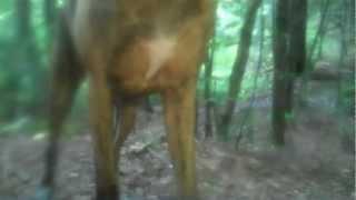 getlinkyoutube.com-Possible Bigfoot in Maine