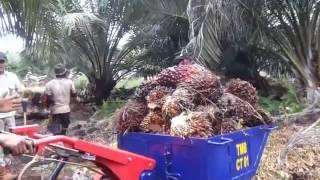 getlinkyoutube.com-Angkong masa depan untuk angkut kelapa sawit