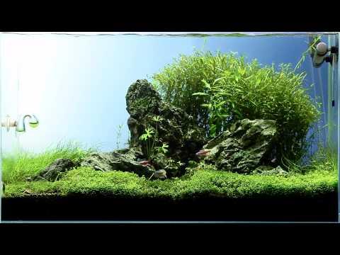 Aquascape malého akvária