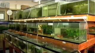 getlinkyoutube.com-Urban Aquaculture: Fish Farming in the City