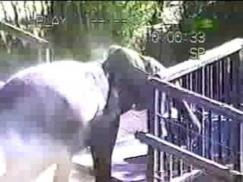 Untamed and Uncut - Elephant Escape