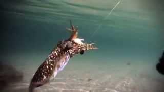 getlinkyoutube.com-Rapala Squid Jig IKADO - Eging