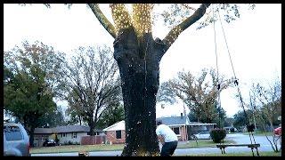 getlinkyoutube.com-THE TREE BLEW A FUSE!!