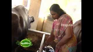 getlinkyoutube.com-Success story of a diary farming by Women : Sweety Diary Farm