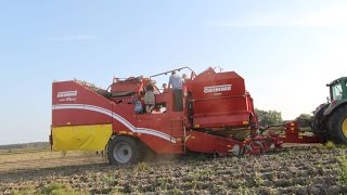 Grimme SE 150-60 2-row potato harvester with XXL separator