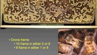 getlinkyoutube.com-6 Weeks As A Beekeeper... Now What? with Kim Flottum