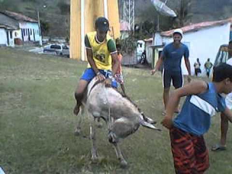 Rodeio de Jegue : Serra Preta