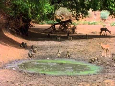 Last Feast of The Crocodiles (National Geographic), documentary.