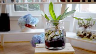 getlinkyoutube.com-Orchids in Water Culture: An Update