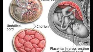getlinkyoutube.com-Development of the Placenta