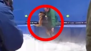 getlinkyoutube.com-Hollywood Stunt Dog Forcefully Pushed Into Terrifying Water Conditions
