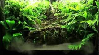 Waterfall Paludarium HD 1080p