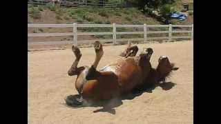 getlinkyoutube.com-Horse Passing Gas