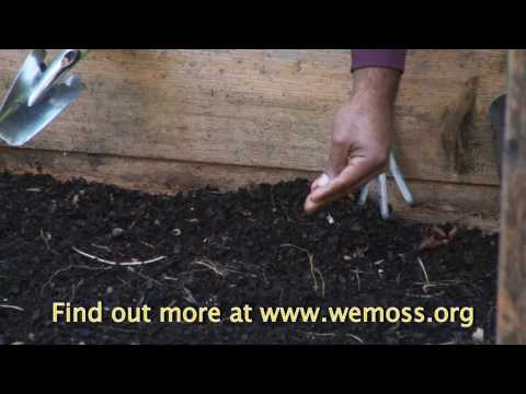 Vegetable Garden: How to Sow Seeds in a Raised Bed Garden