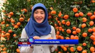getlinkyoutube.com-NET12 - Tanaman pohon jeruk hias