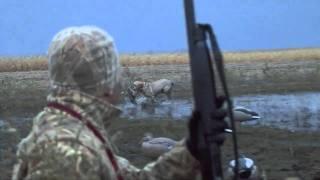 getlinkyoutube.com-Duck Hunting Mallards and Pintails