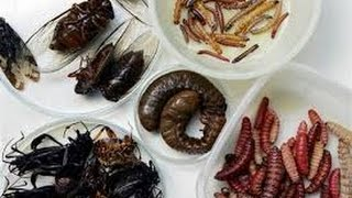 getlinkyoutube.com-Insects and strange food in China - Beijing Wangfujing Night Market