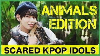 getlinkyoutube.com-Scared K-Pop Idols: Animals Edition