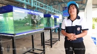 getlinkyoutube.com-เศรษฐีเกษตร 8/8/58 : เคล็ดลับ! เพาะพันธุ์ปลากรายให้เป็นเศรษฐี
