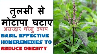 getlinkyoutube.com-तुलसी से मोटापा घटाए Basil effective Home remedies to Reduce obesity