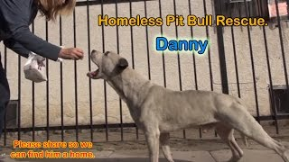 getlinkyoutube.com-Danny - Homeless Pit Bull gets rescued off the streets.
