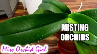 getlinkyoutube.com-The problem with misting Orchids + Small experiment