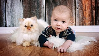 getlinkyoutube.com-Cute Cats and Dogs Love Babies Compilation 2017