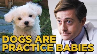 getlinkyoutube.com-Dogs are Practice Babies