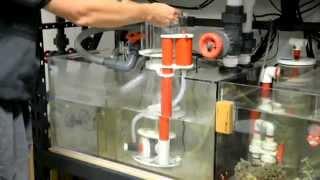 getlinkyoutube.com-Setting up Best New Protein Skimmer