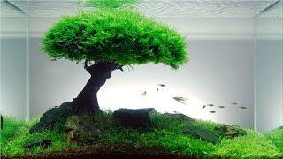 getlinkyoutube.com-Cara buat Aquascape Natural HD
