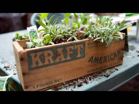 How to Garden for Earth Day: Window Box, Urban Gardening