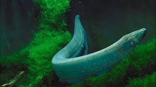 getlinkyoutube.com-Eel Machhali (Fish) Ka Kissa - By Maulana Tariq Jameel Short Bayan Very Amazing