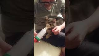 My asthmatic kitty cat getting his meds