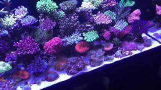 getlinkyoutube.com-Update of the worlds best Red Sea Reefer!