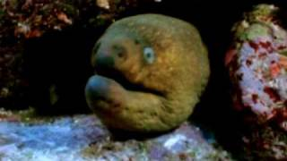 Moray Eel VS Octopus- 3 Different Face Off's