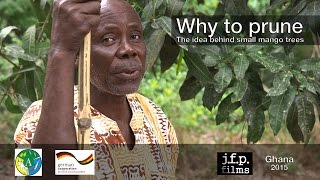 getlinkyoutube.com-Why to prune - The idea behind small mango trees