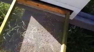 getlinkyoutube.com-Little Creek Bee Ranch fall pollen harvest
