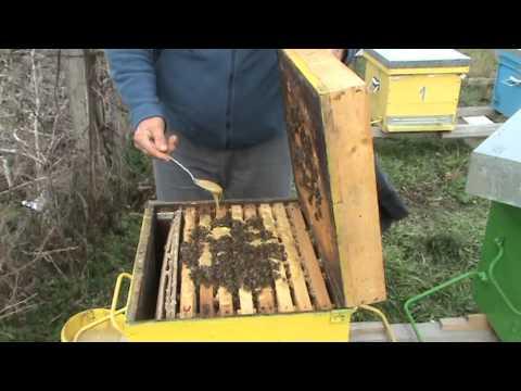 Prima stimulare a fam de albine 18 ianuarie 2014