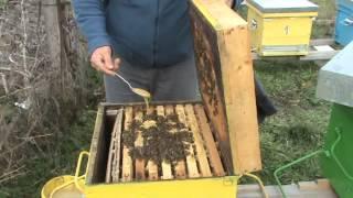 getlinkyoutube.com-Prima stimulare a fam de albine 18 ianuarie 2014
