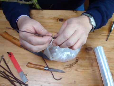 Apple tree grafting lesson-the saddle, cleft and rind grafts
