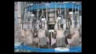 getlinkyoutube.com-Mesin Penyembelihan Ayam (hukumnya ada di bawah)