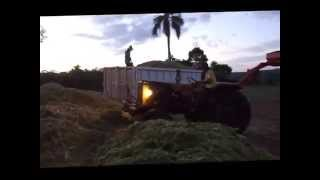 getlinkyoutube.com-fazendo silagem ( Massey Ferguson + Ford)